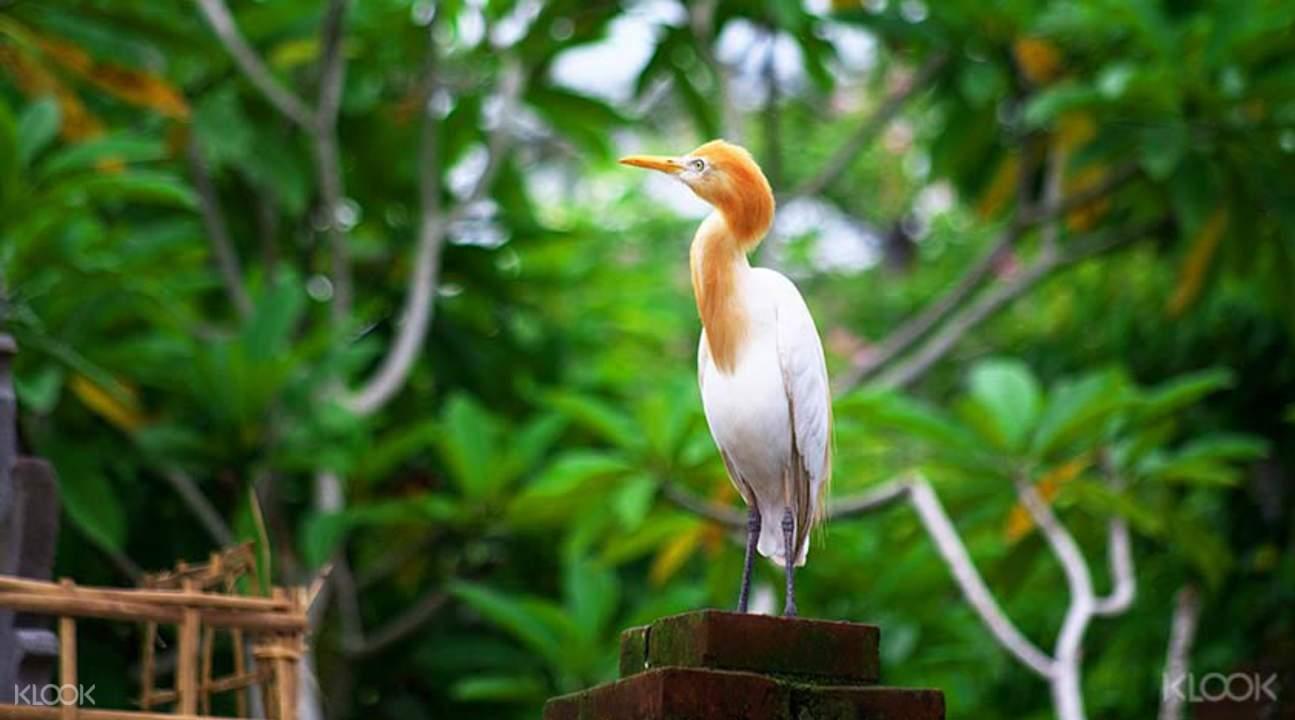 巴厘島野生鳥園