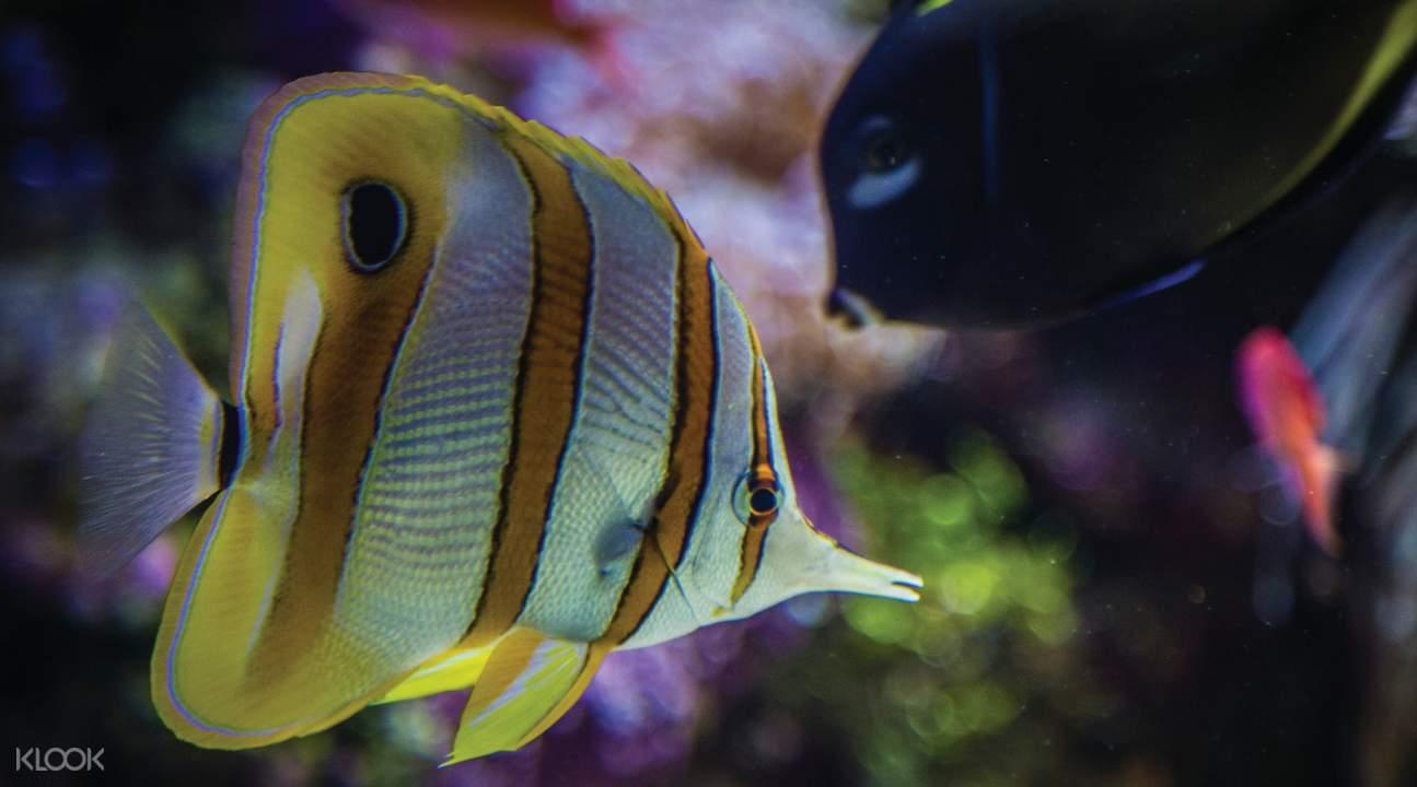 coral and fishes sydney sea life aquarium