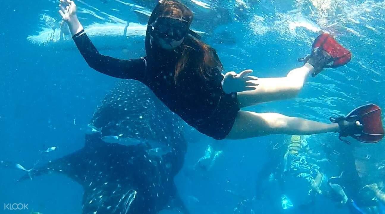 奥斯洛鲸鲨共游