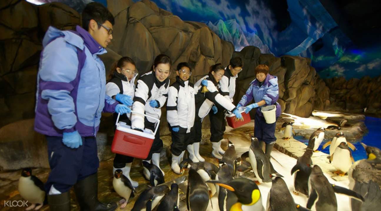 企鹅家里作客