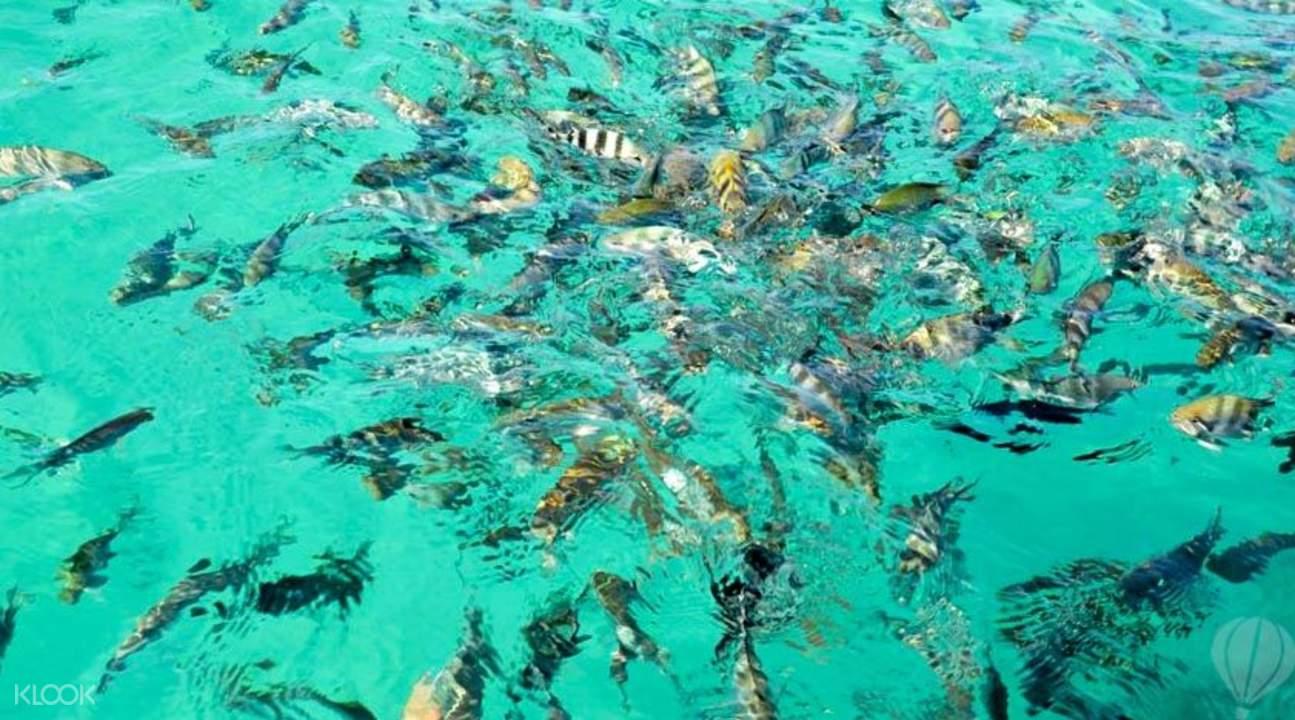 Enjoy Blue Bay Mauritius