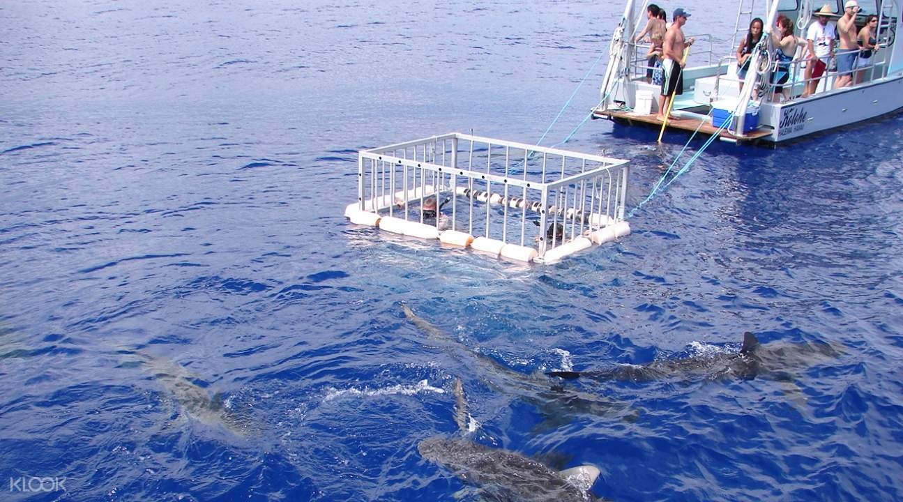 a shark cage in Oahu; there are sharks swimming beside it