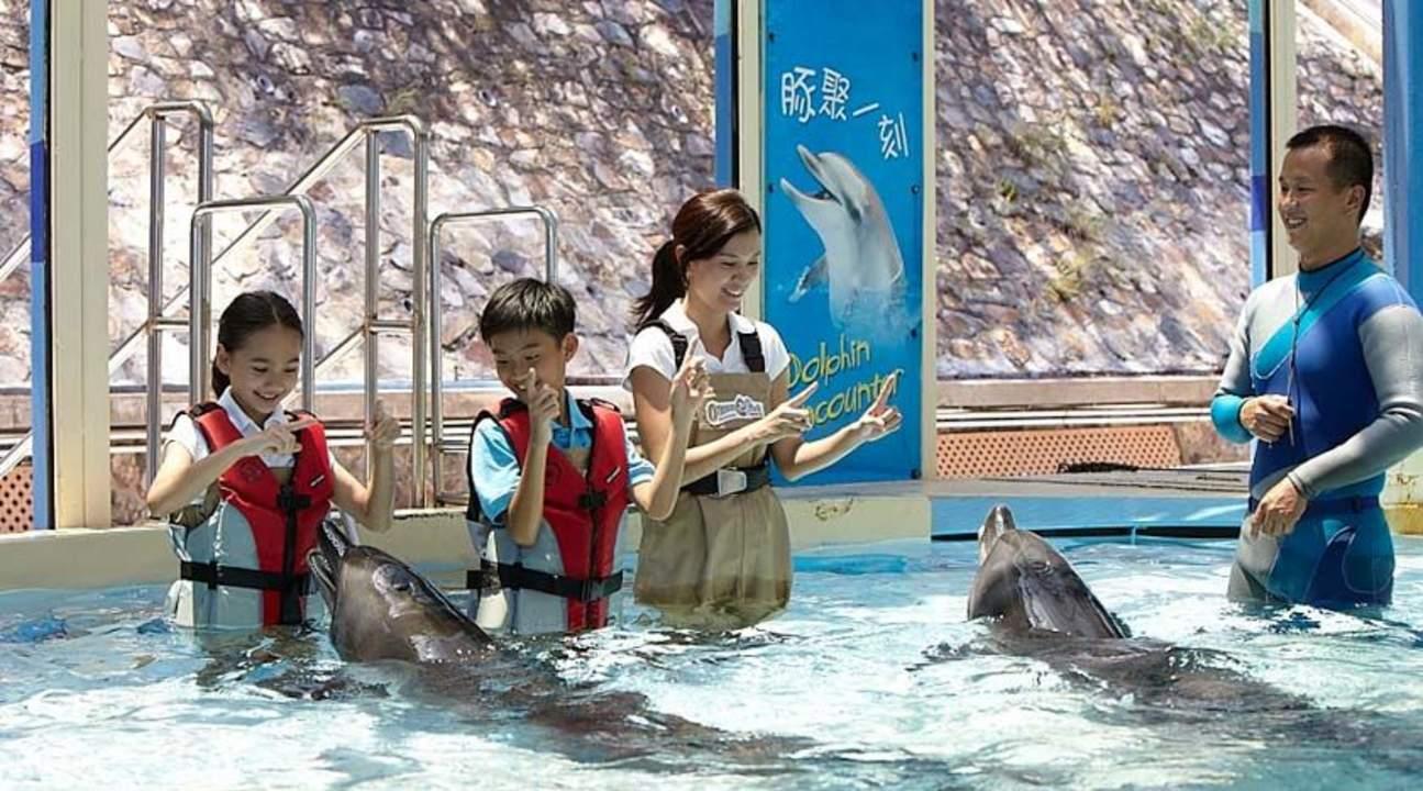 hong kong ocean park dolphins