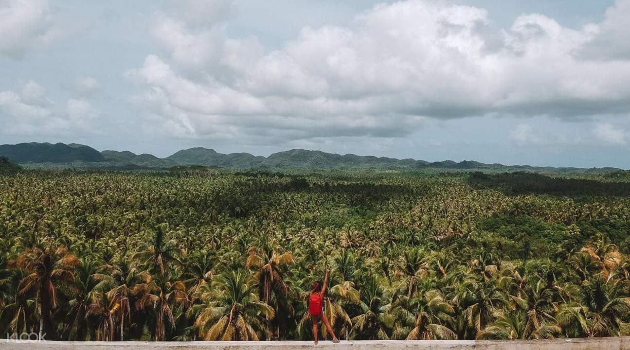 coconut road