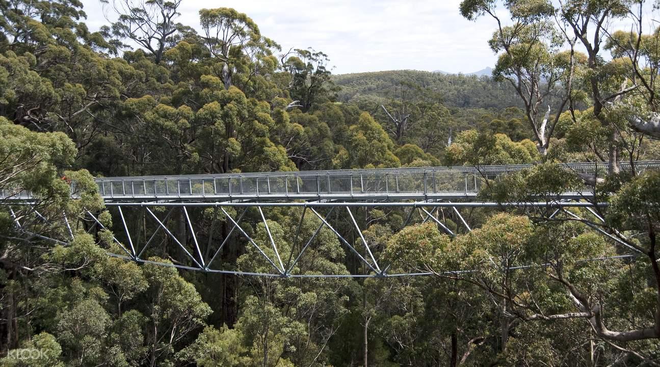 西澳巨人谷探索及樹頂漫步壹日遊
