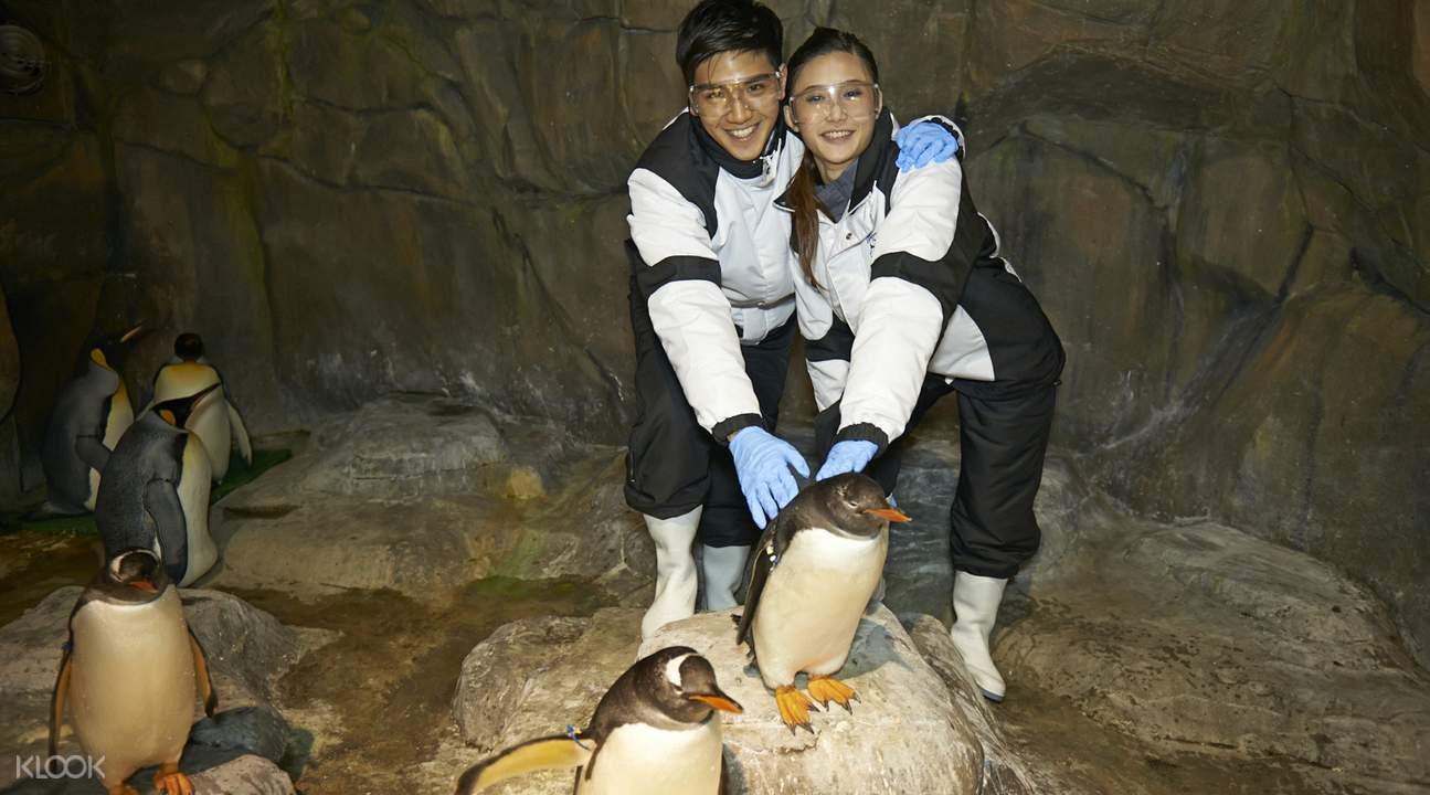 香港海洋公园企鹅