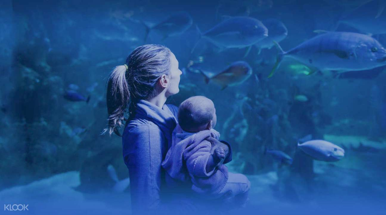 With over 13, marine animals, explore Australia's extraordinary and colorful sea life at the Sydney Sea Life Aquarium. Face your fears at the Shark Walk and Valley and watch as grey nurse and lemon sharks glide over your head.