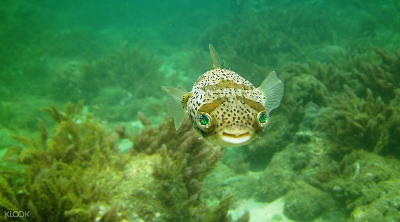 澎湖海洋潛水