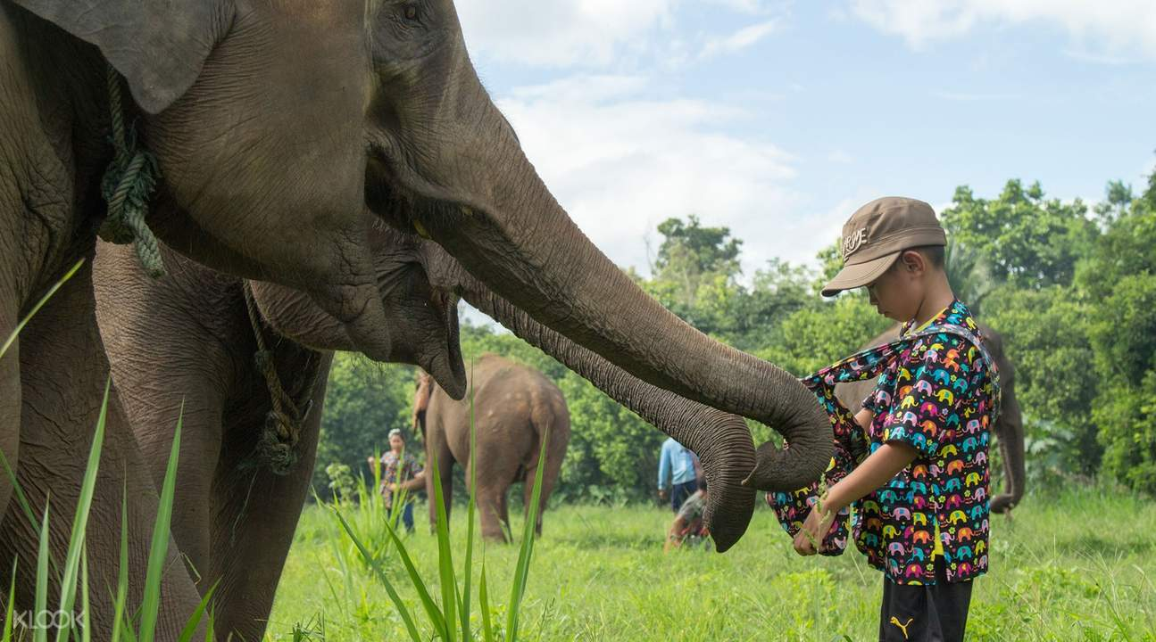 elephant sanctuary and flight of the gibbon chiang mai