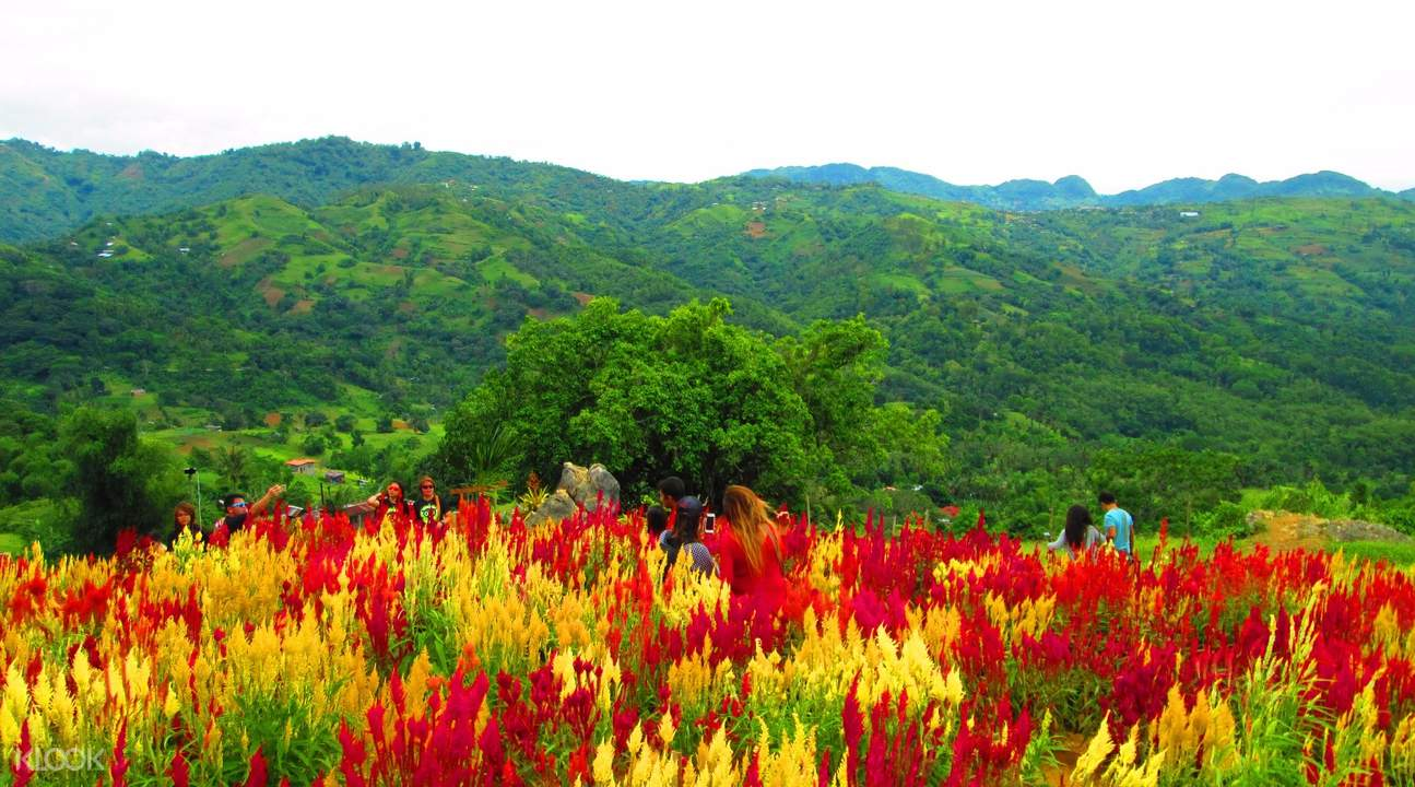 Celosia Flower Farm and Jumalon Butterfly Sanctuary Half Day Tour