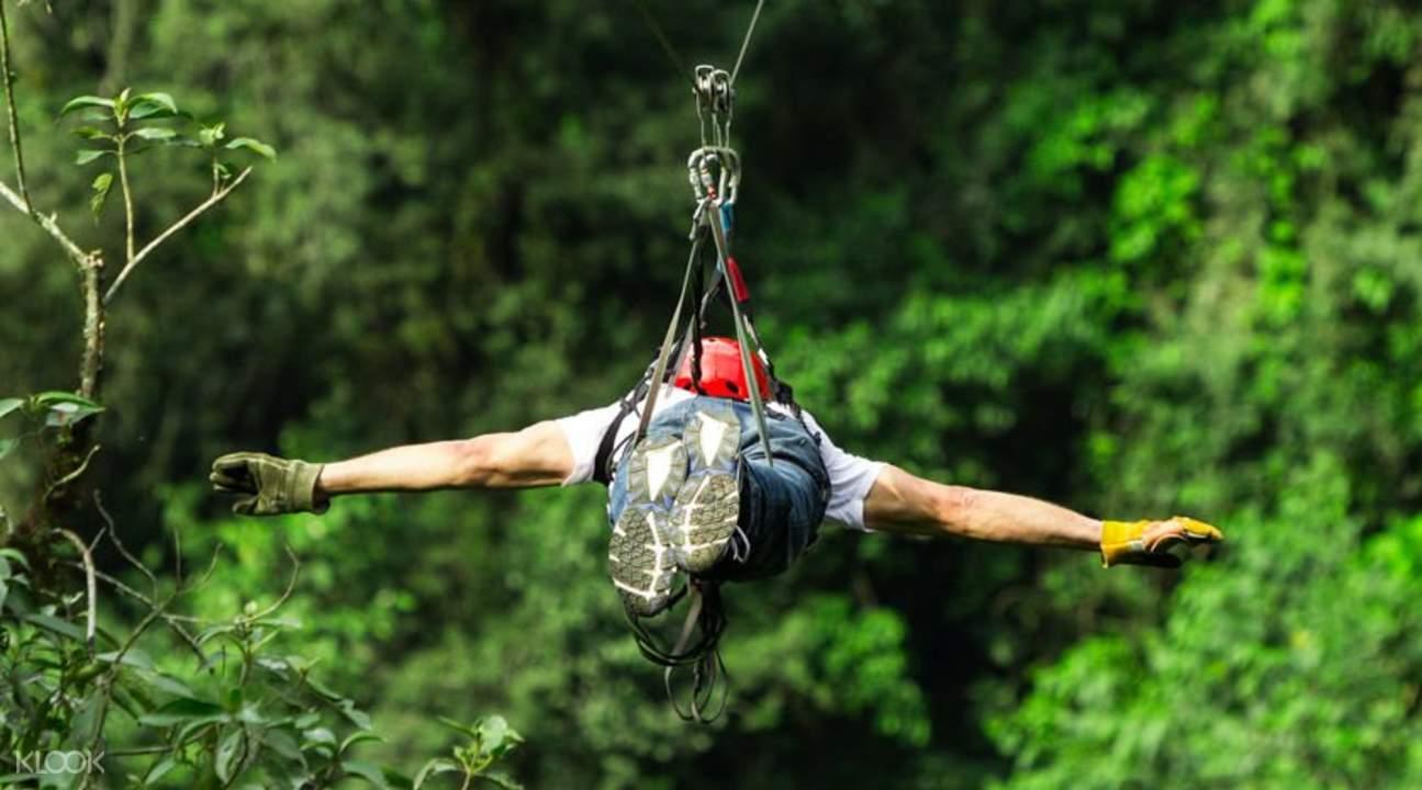 长臂猿飞跃丛林