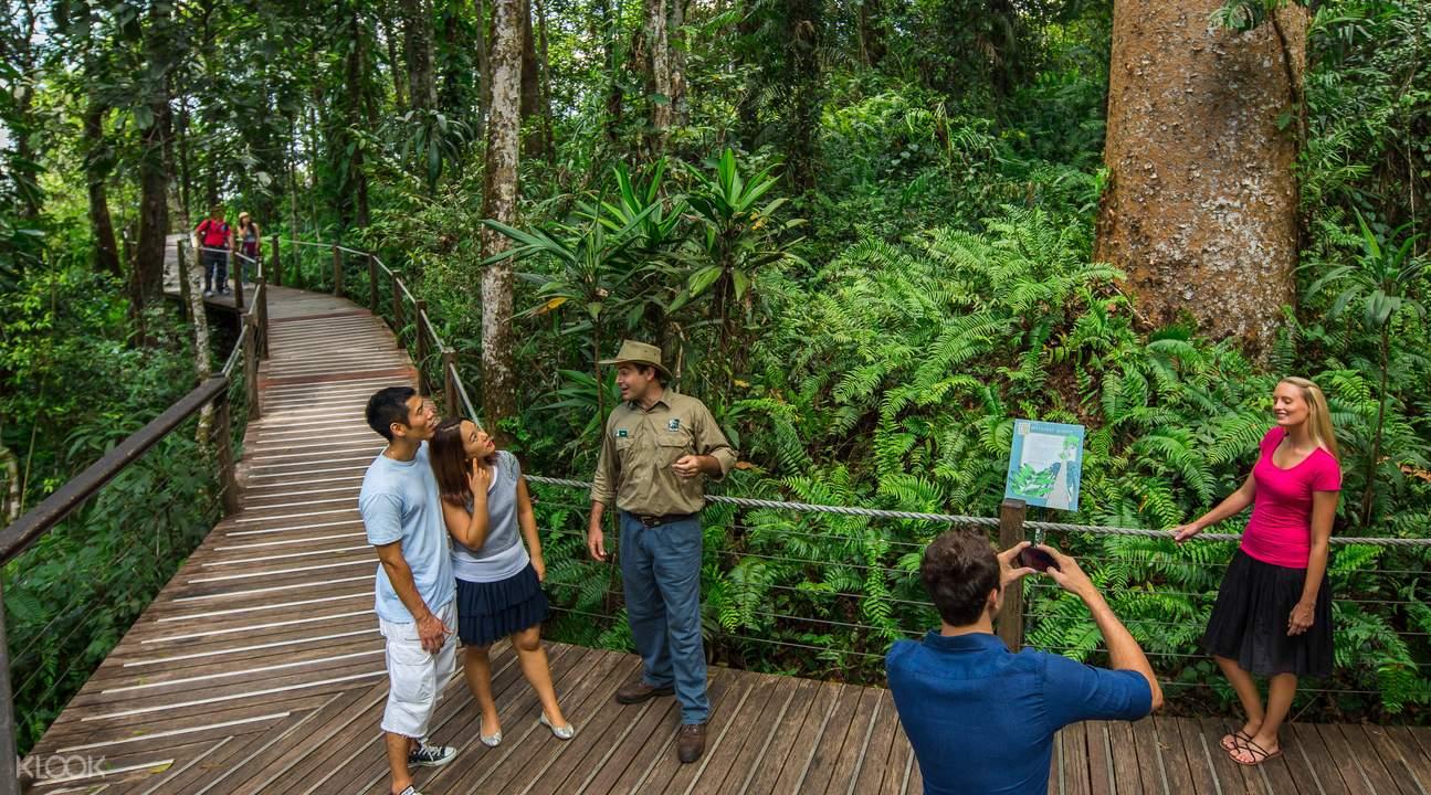 Rainforest Skyrail Cairns