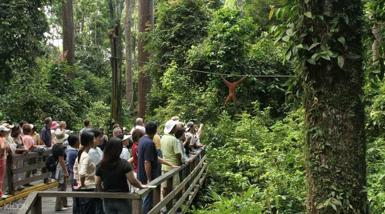 西必洛猿人保護區半日游