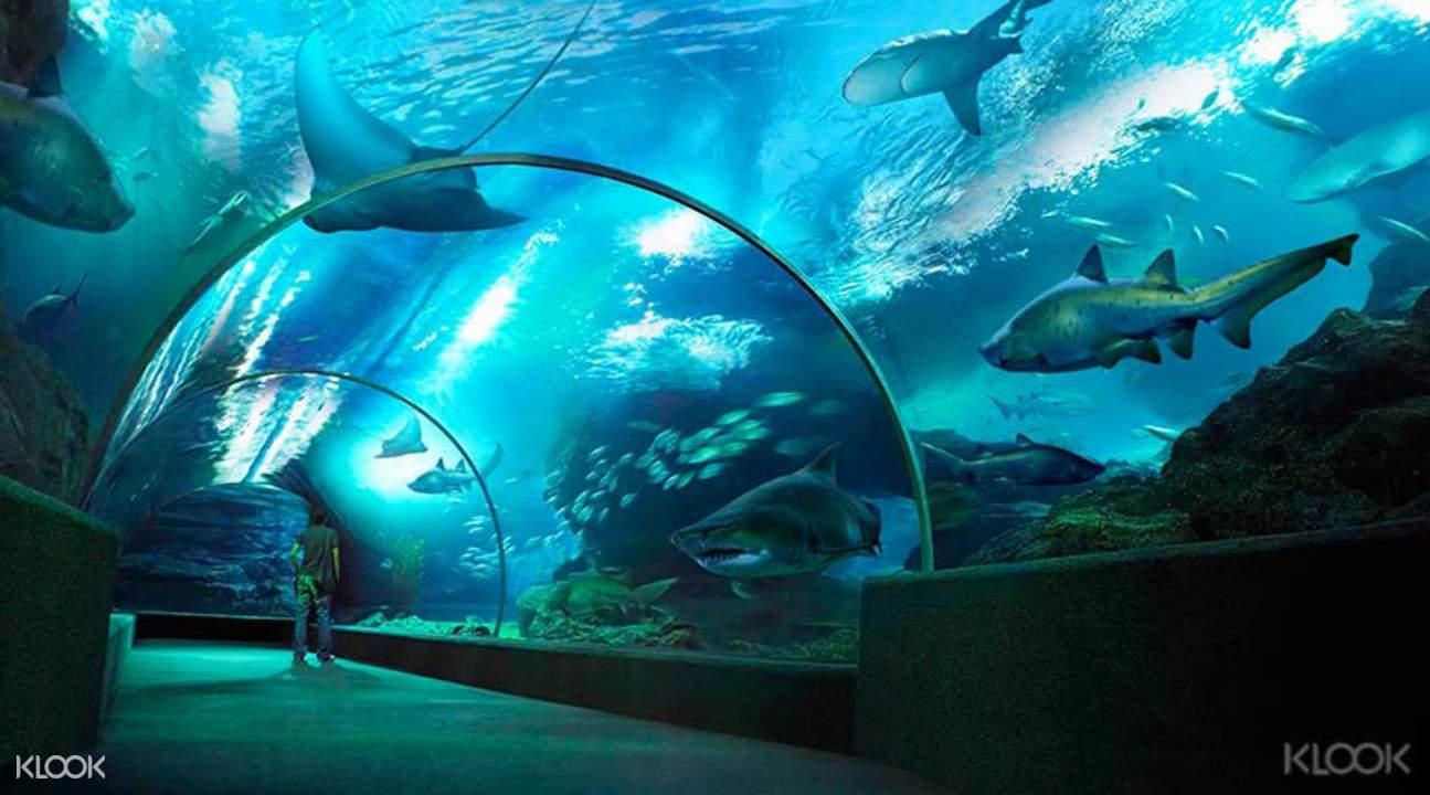 暹羅海洋世界海底隧道