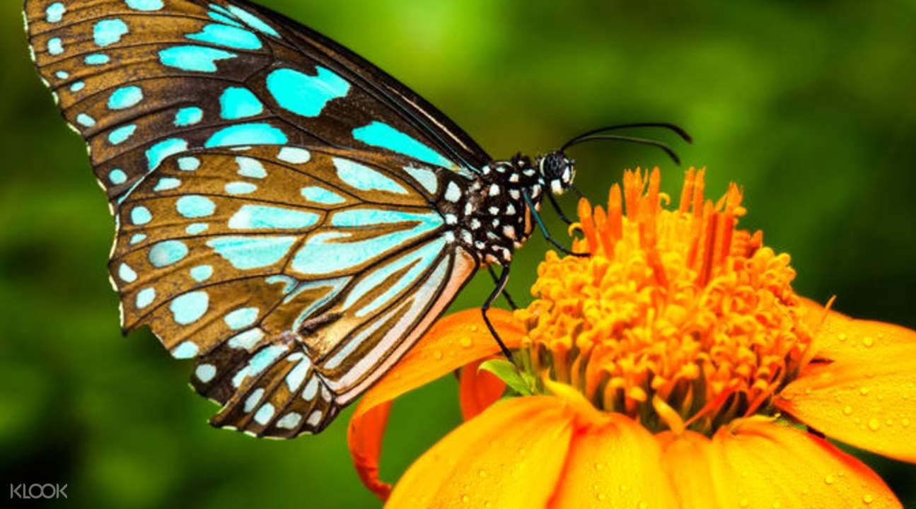 吉隆坡蝴蝶园