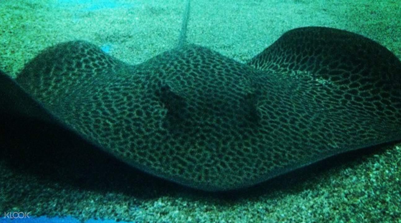 stingray at langkawi underwater world