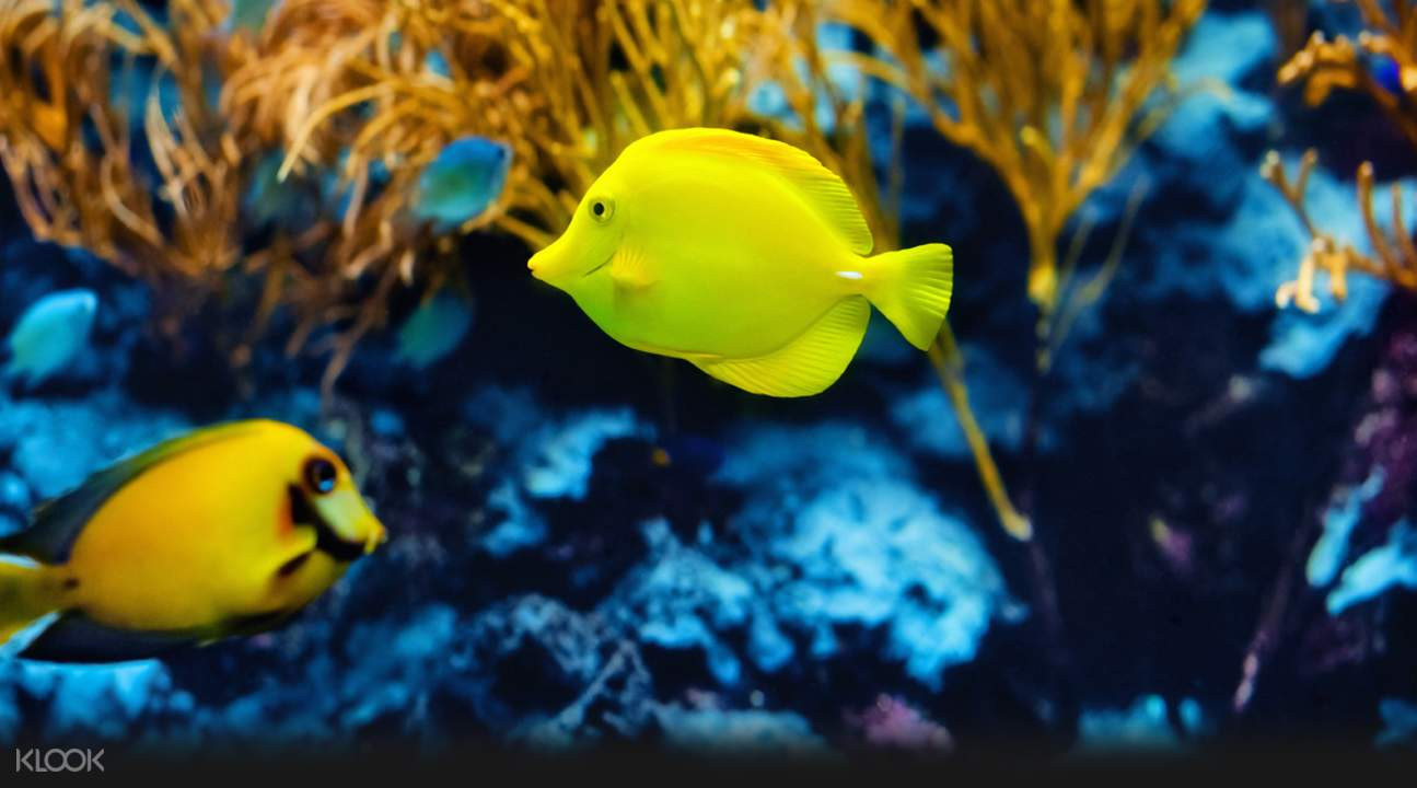 Discover up to 250 different incredible marine species