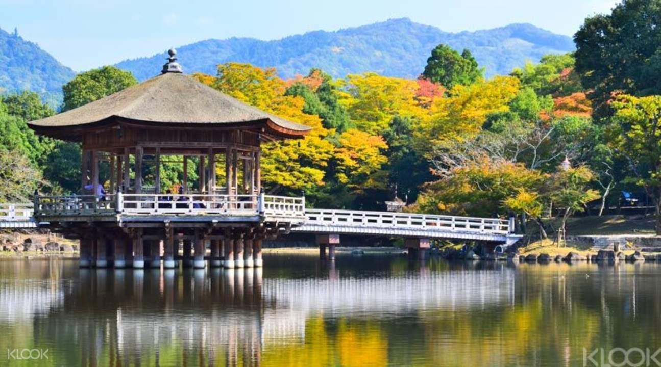 奈良半日遊,奈良公園一日遊