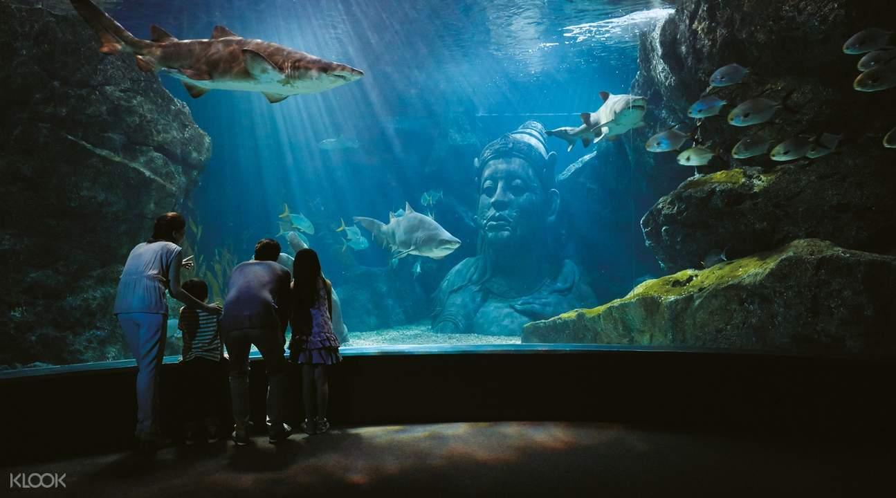 sea life bangkok ocean world tickets siam ocean world klook