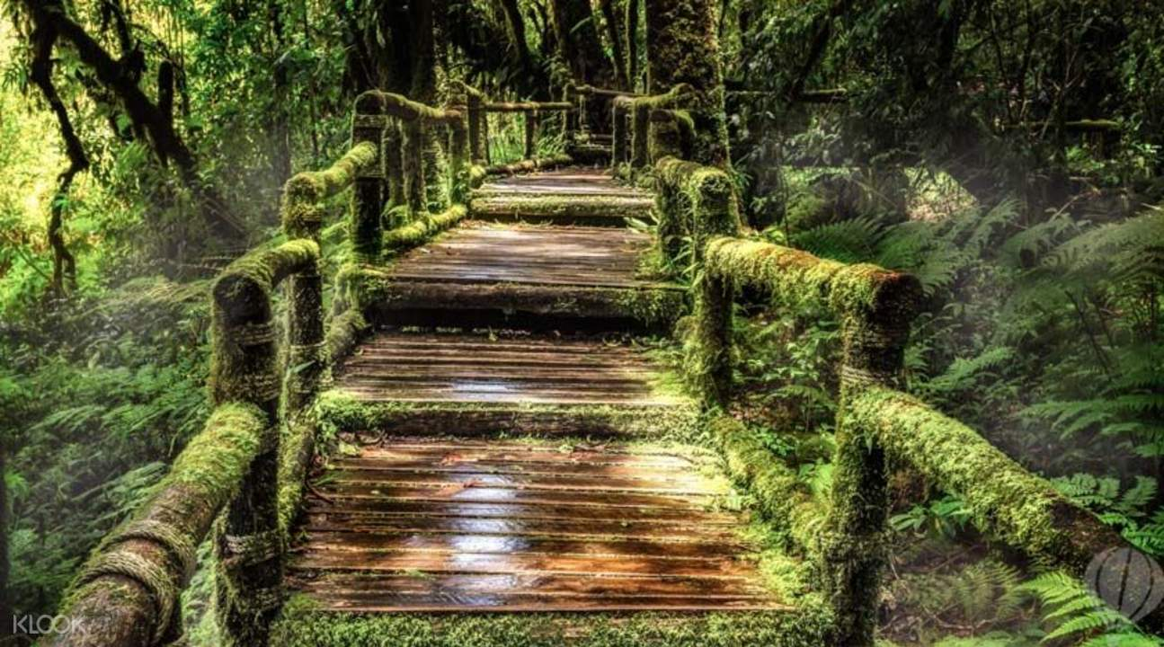 Doi Inthanon National Park - Klook