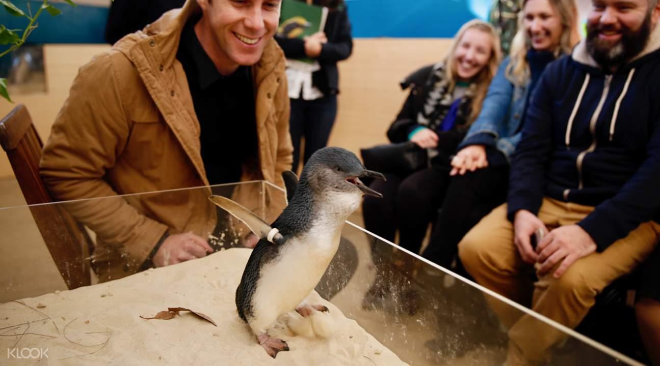 little penguin experience melbourne zoo