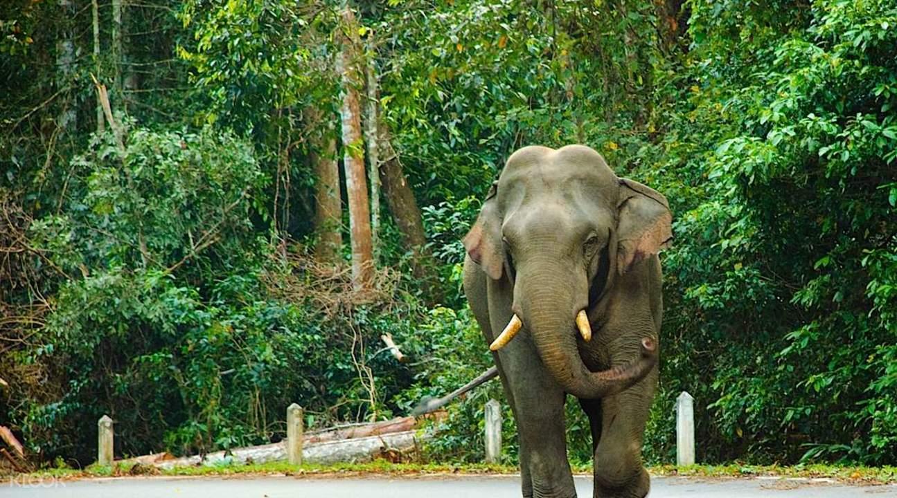 泰國考艾國家公園