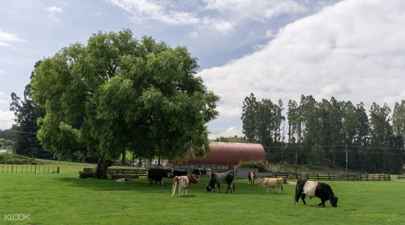愛歌頓農場