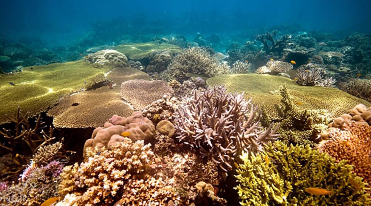 coral garden underwater in Siete Pecados Marine Park