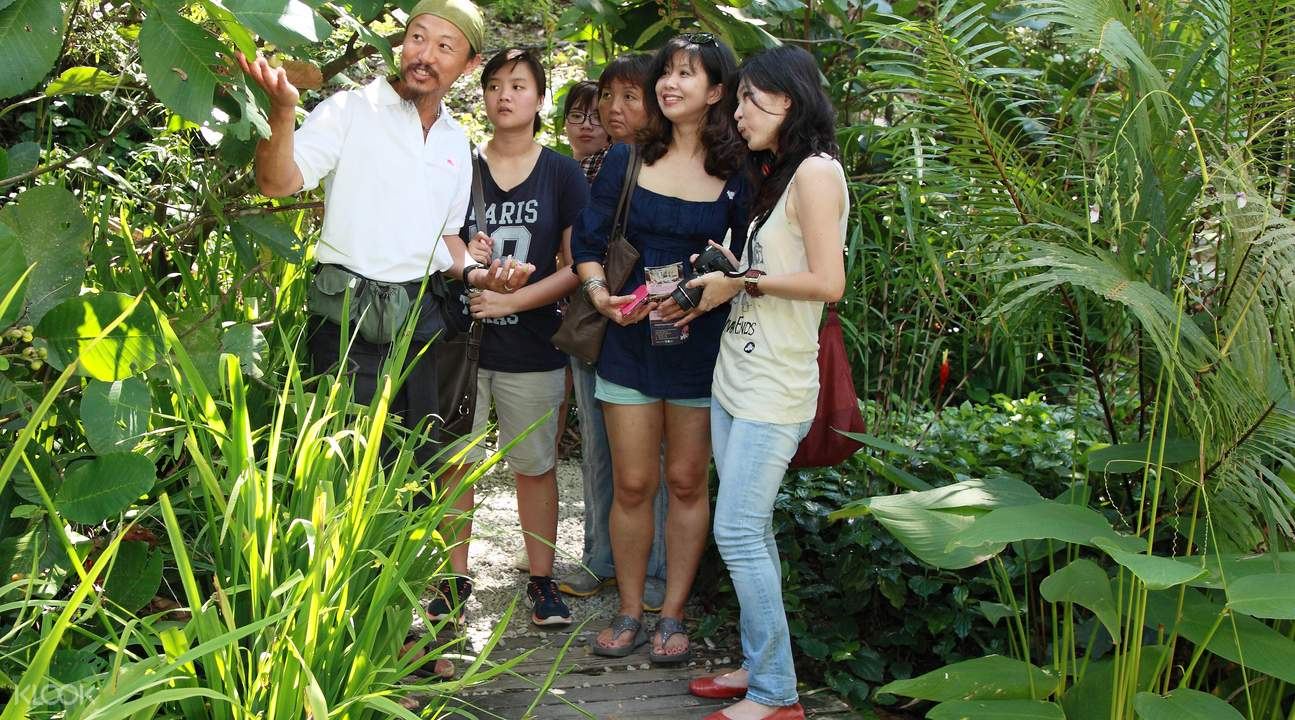 热带香料园植物