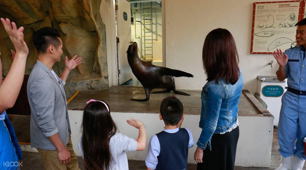 香港海洋公园约会海狮体验