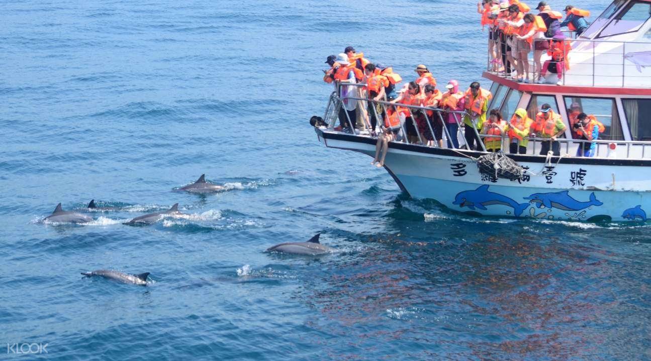 whale watching hualien