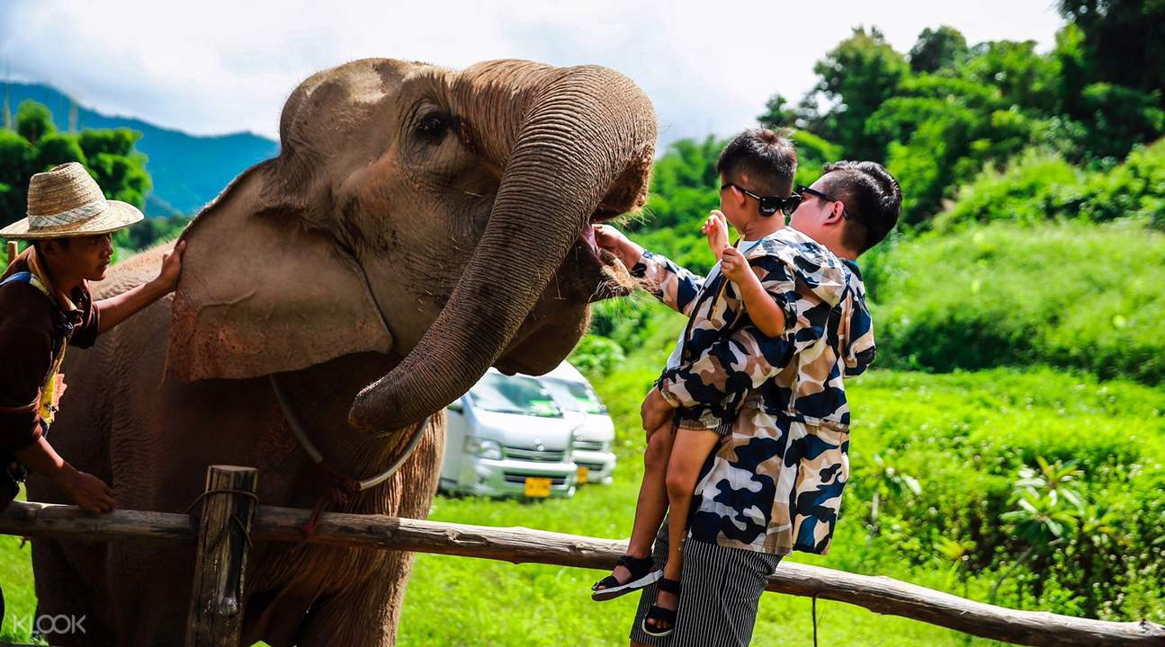 guests petting elephant