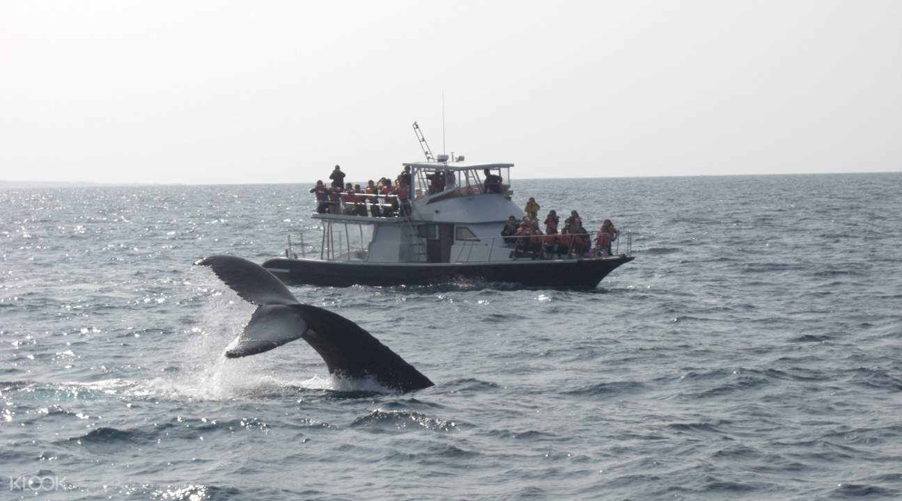 whale watching tour okinawa