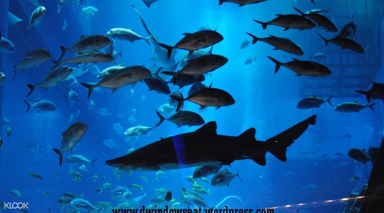 杜拜水族館