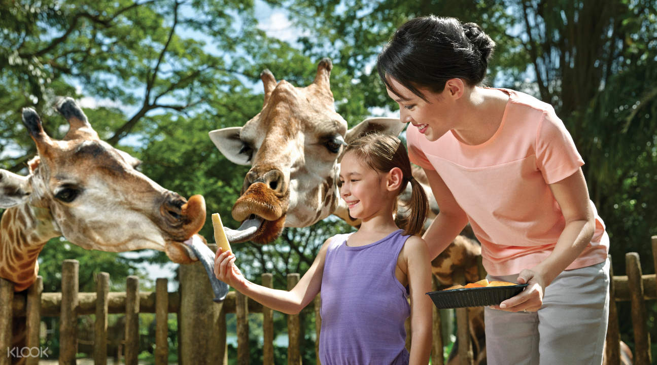 a woman and her daughter interacting with giraffes in the Singapore Zoo
