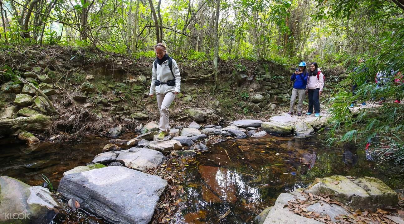 lush vegetation lai chi wo hiking tour hong kong