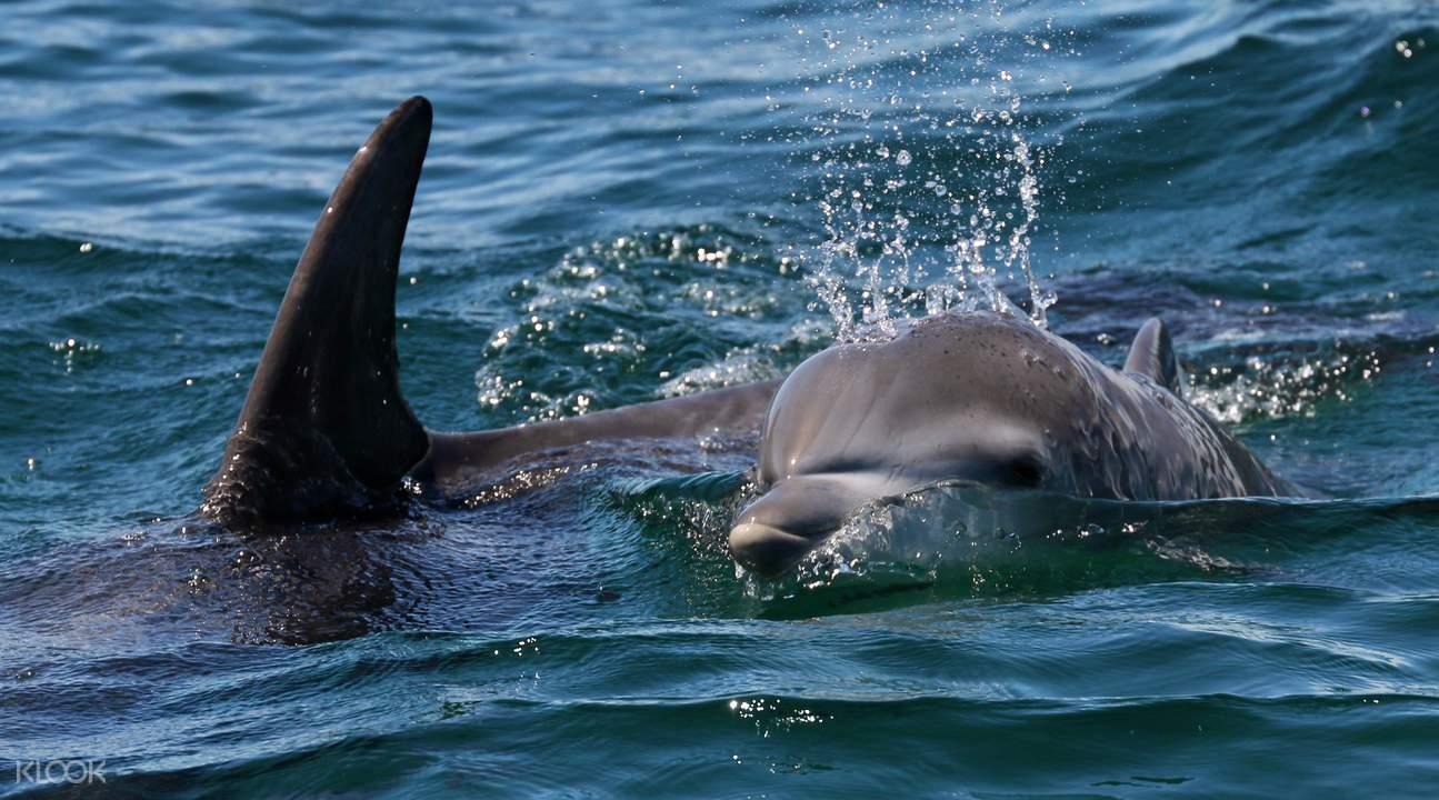 傑維斯灣觀海豚生態遊