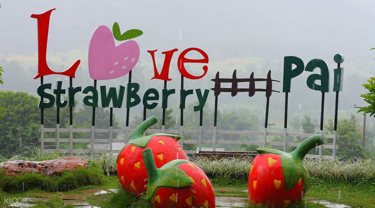 包車導覽清邁拜縣& 草莓園& 倒立小屋文藝之旅