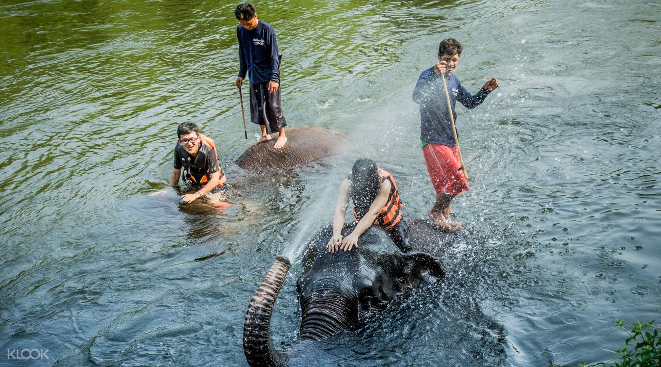 kanchanaburi elephant camp day tour from bangkok thailand