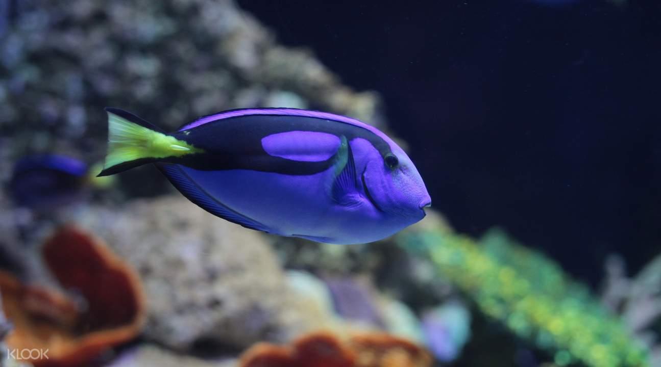 悉尼海洋生物水族館