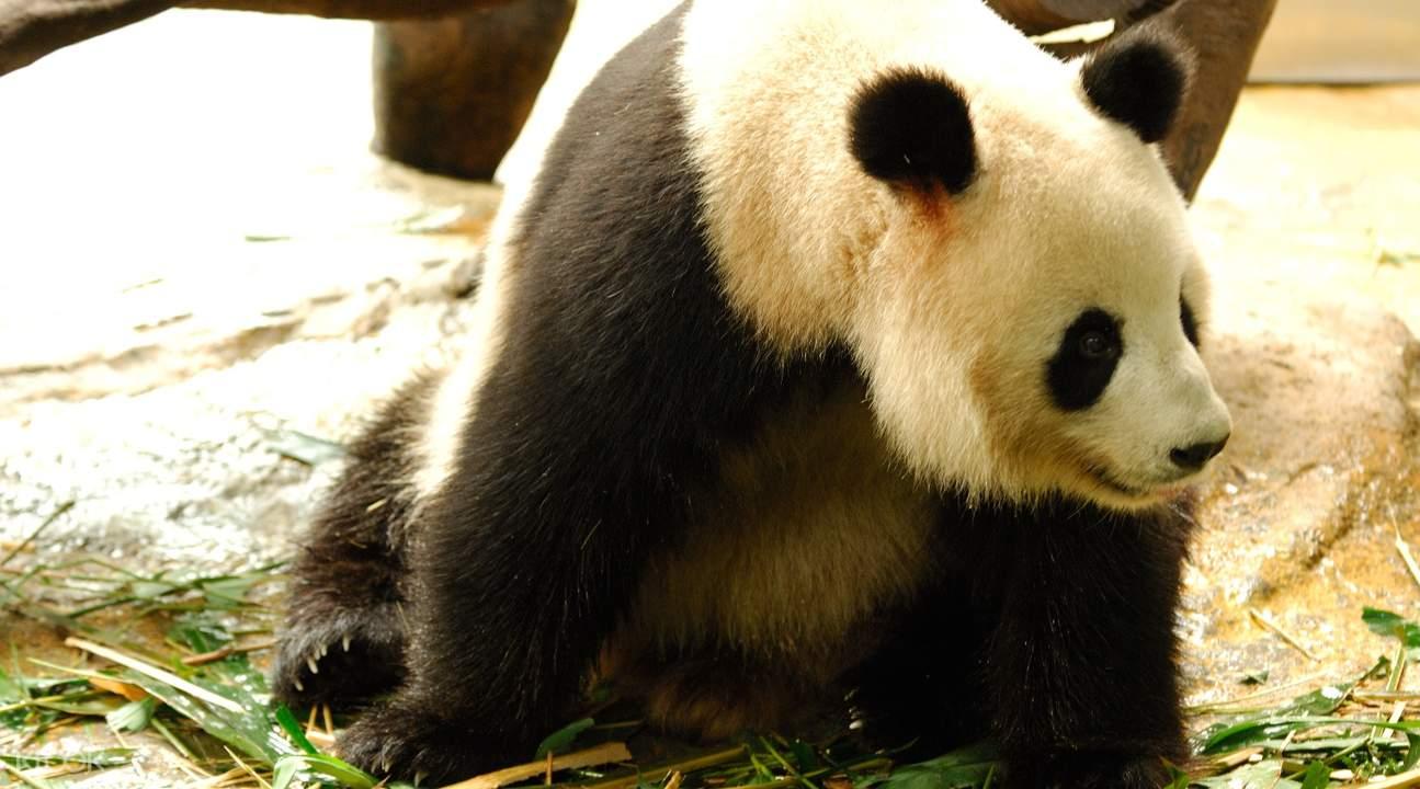 广州长隆野生动物世界门票(中国籍游客限定)
