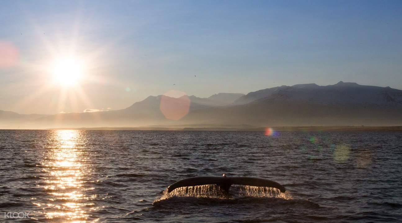 冰島北海岸美食體驗