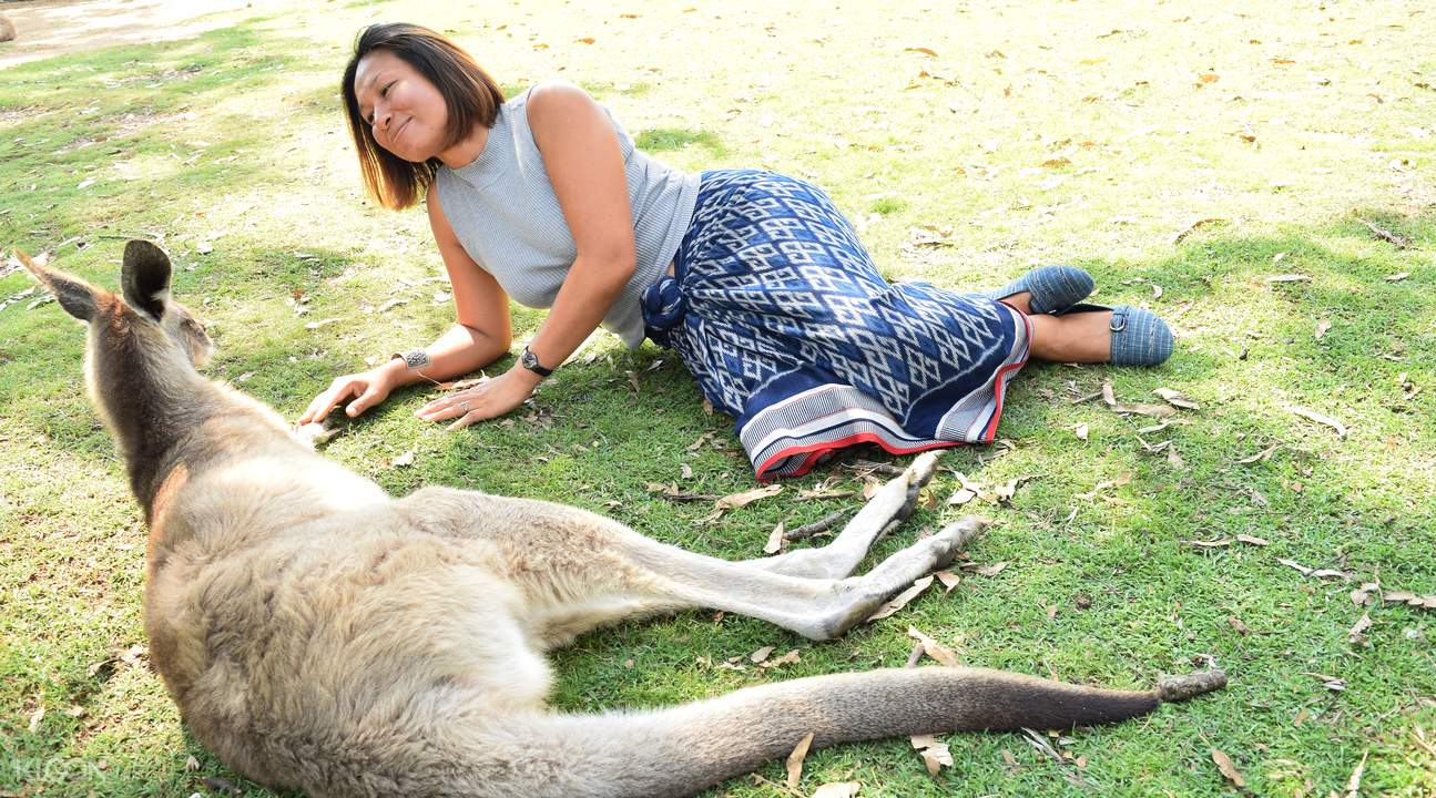 澳大利亞動物園一日遊