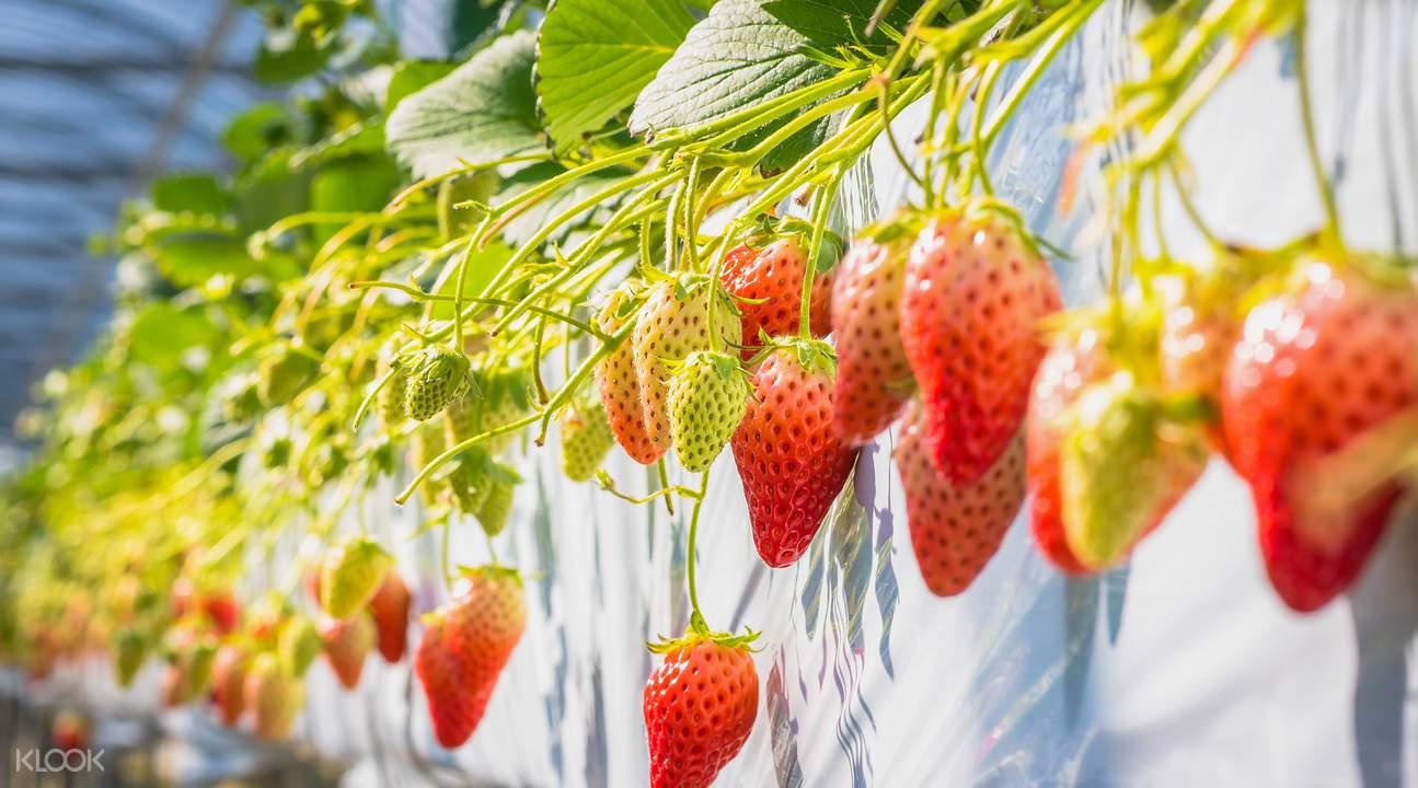 大湖草莓文化馆