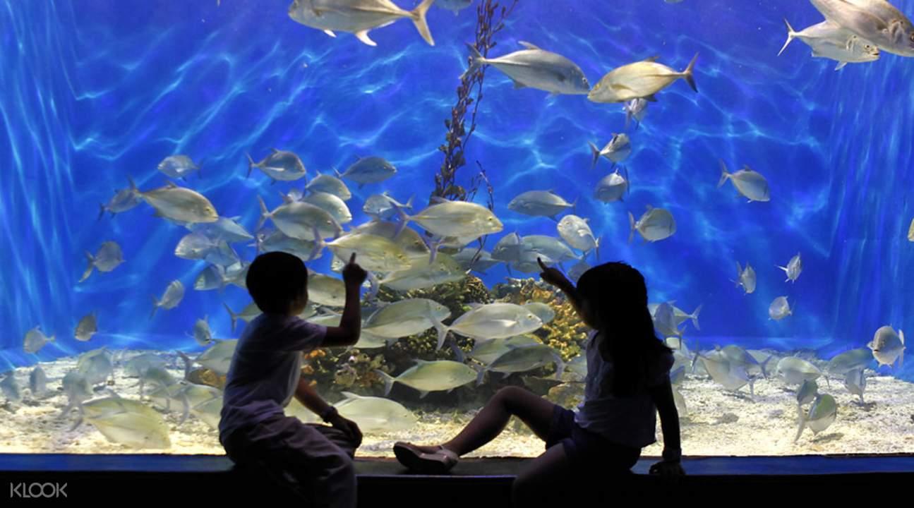 馬尼拉海洋公園