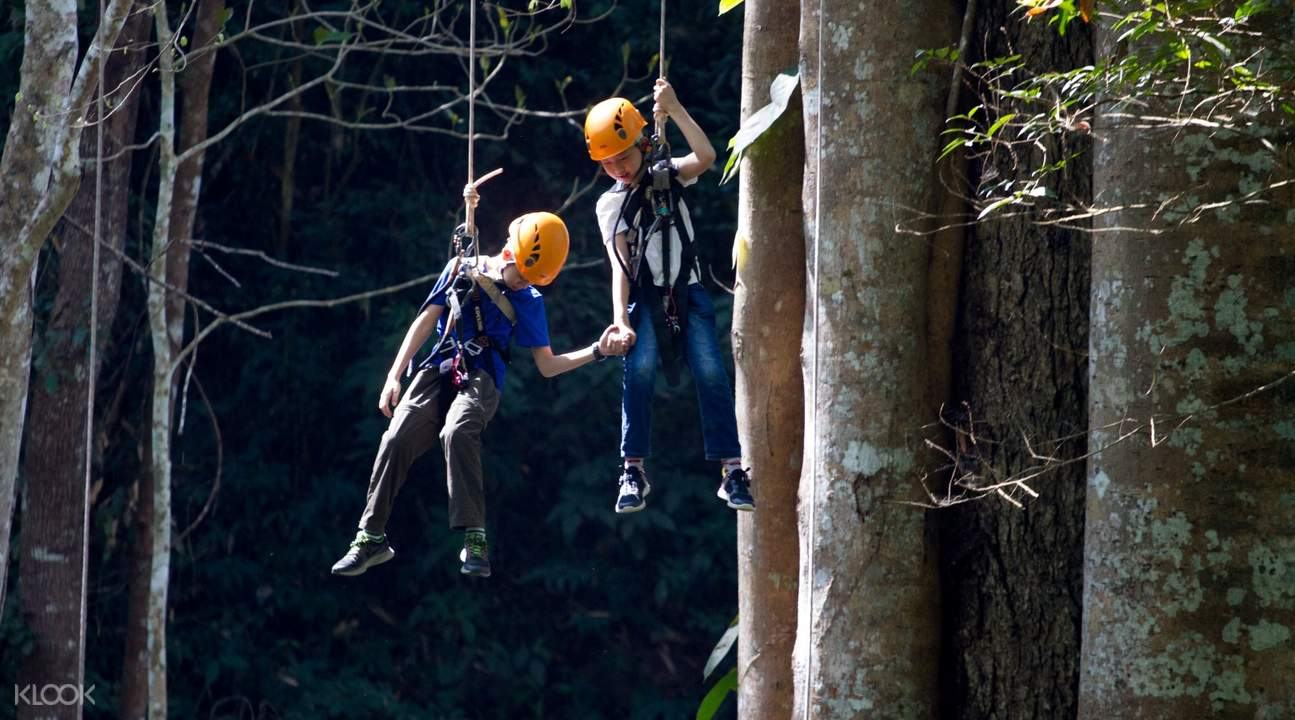 kids abseiling in forest