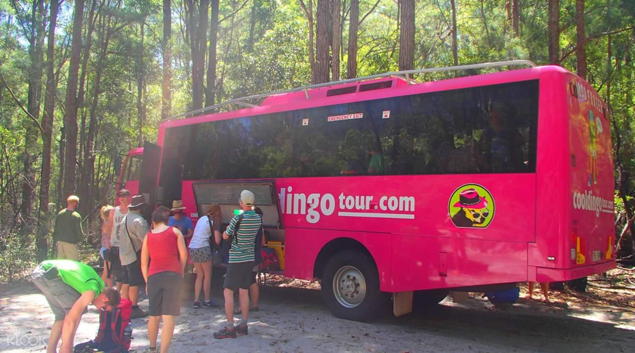 cool dingo 2d 1n fraser island tour