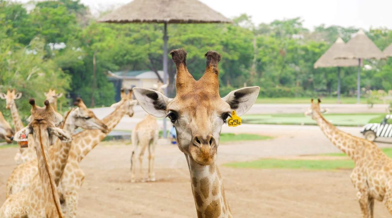 賽佛瑞野生動物園一日遊