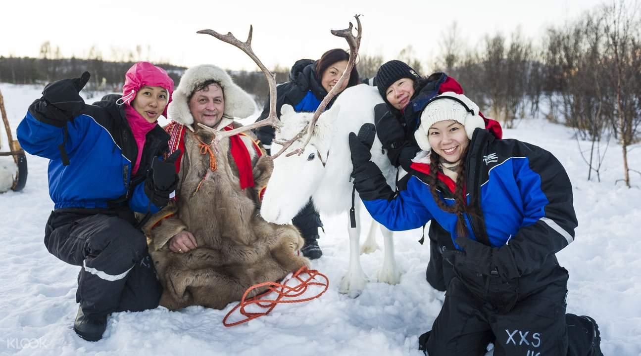 北极圈驯鹿