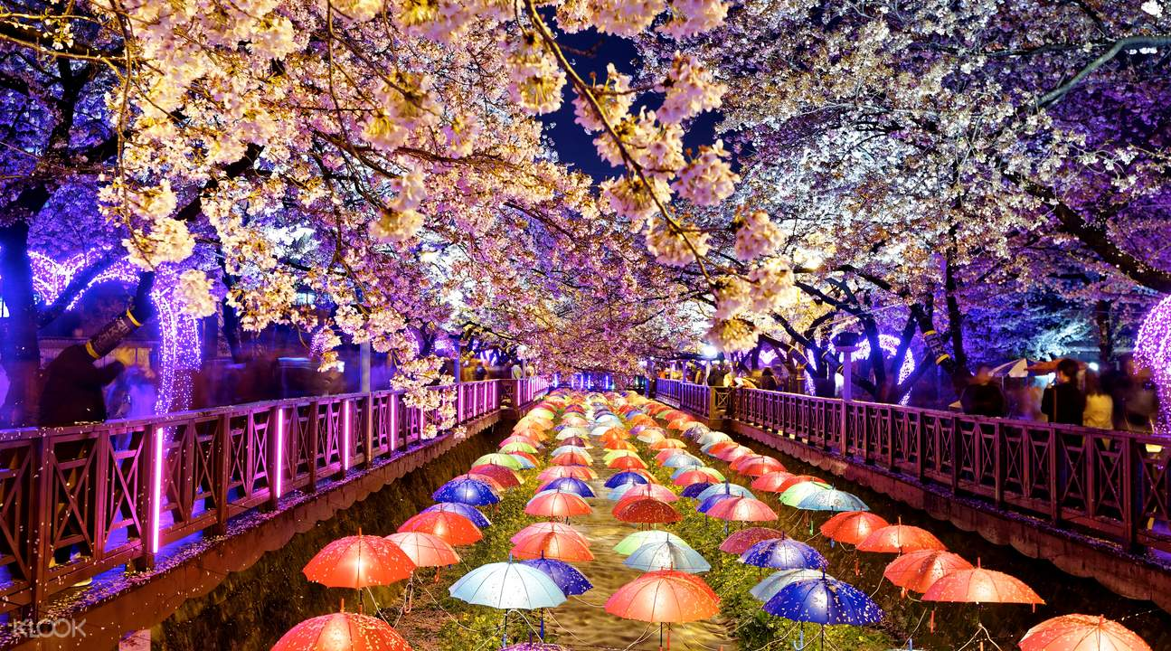 Jinhae Cherry Blossoms Tour